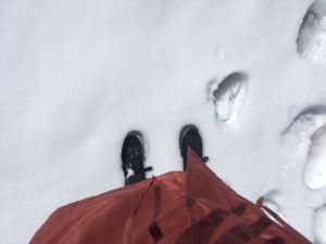 pumas in de sneeuw